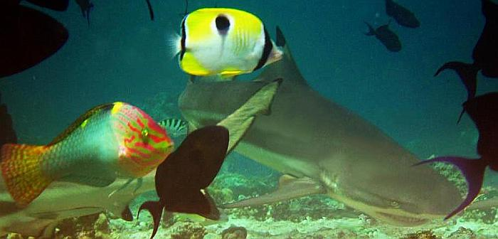 On Reef Shark Attacks
